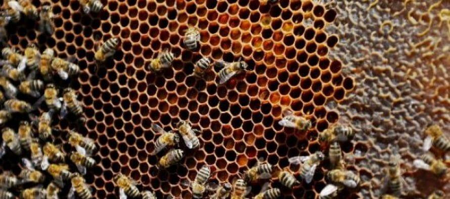 La complicada relación entre insecticidas, polinizadores y plantas hace necesaria una...