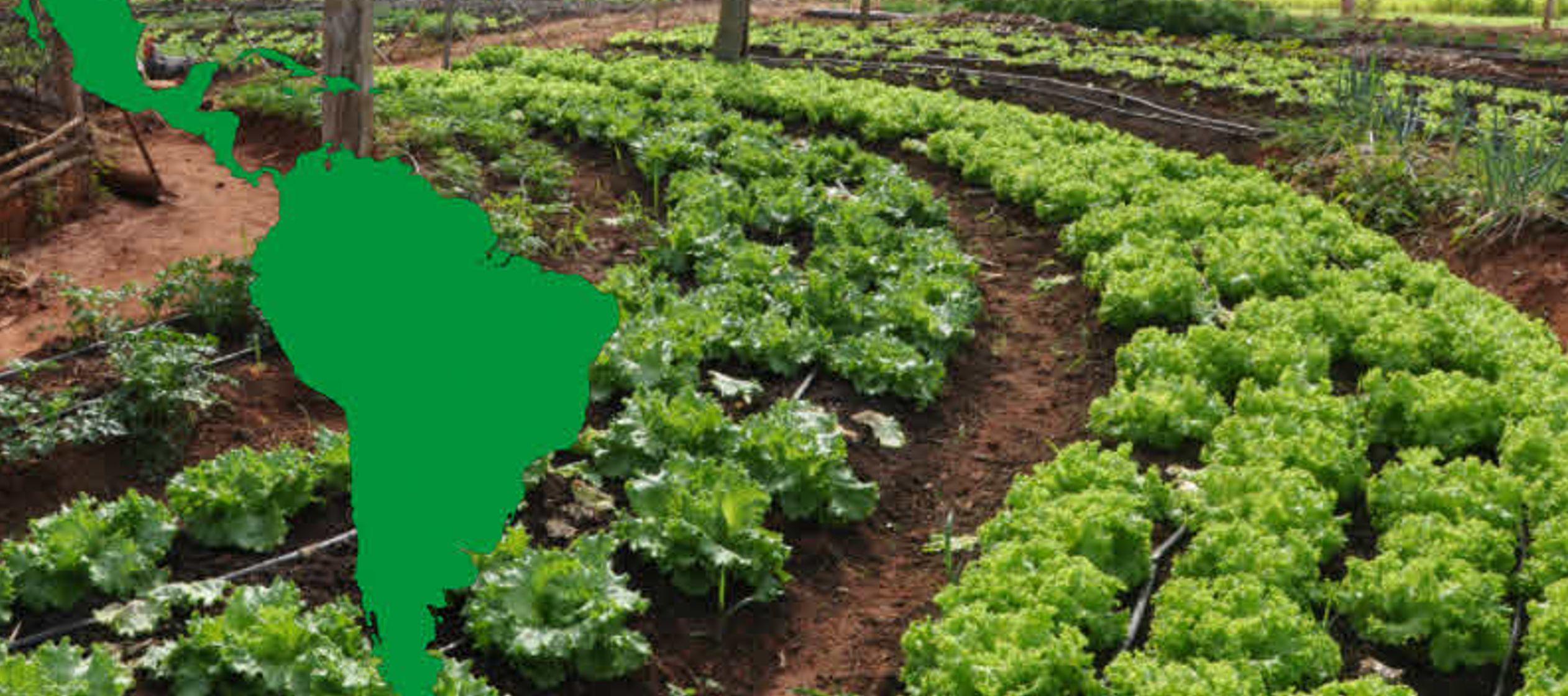 IICA busca alianzas público-privadas para impulsar la agricultura en América