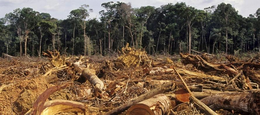 La deforestación interrumpe el patrón regional de lluvias