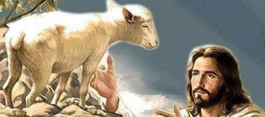 Hoy, el Evangelio nos invita a descubrir la importancia de descansar en el Señor. Los...