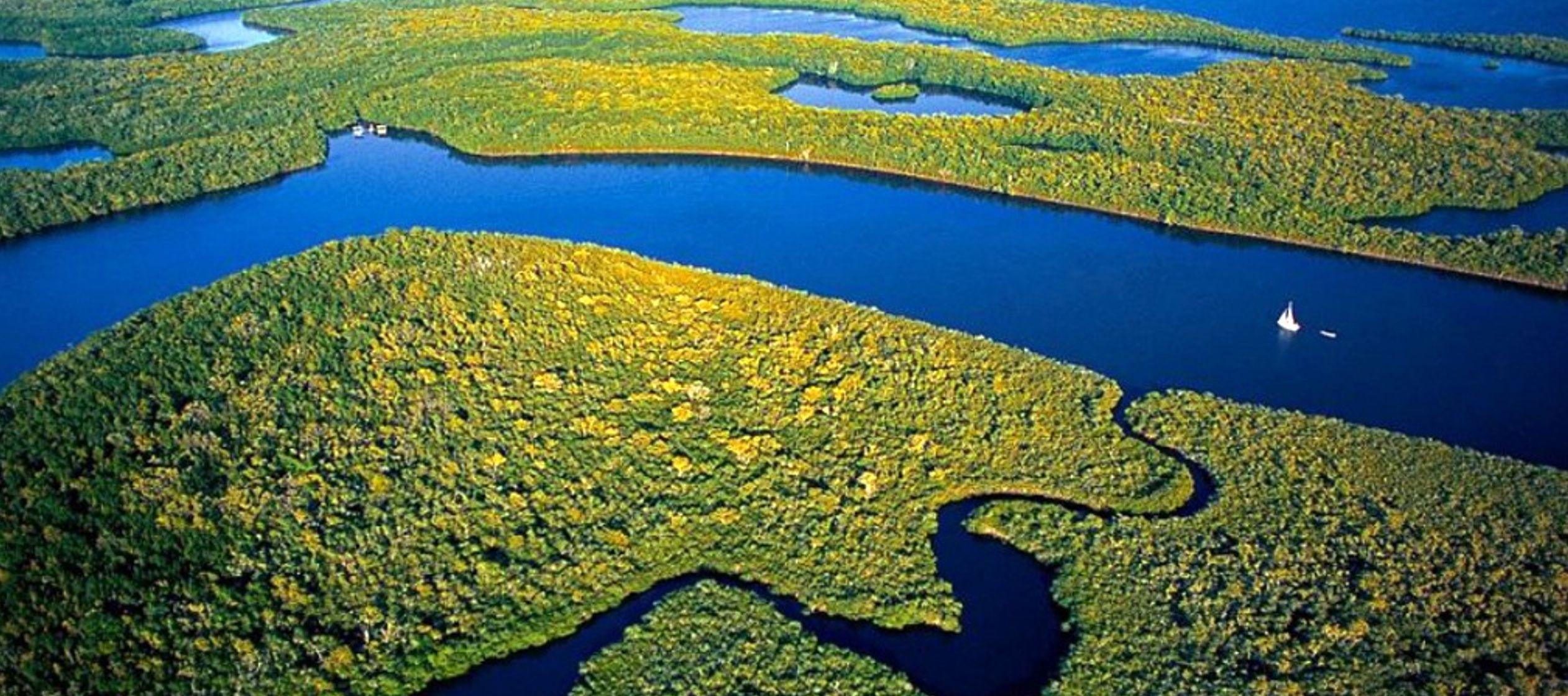 El 71 % de la deforestación de bosques registrada en entre enero y junio se dio en cuatro...