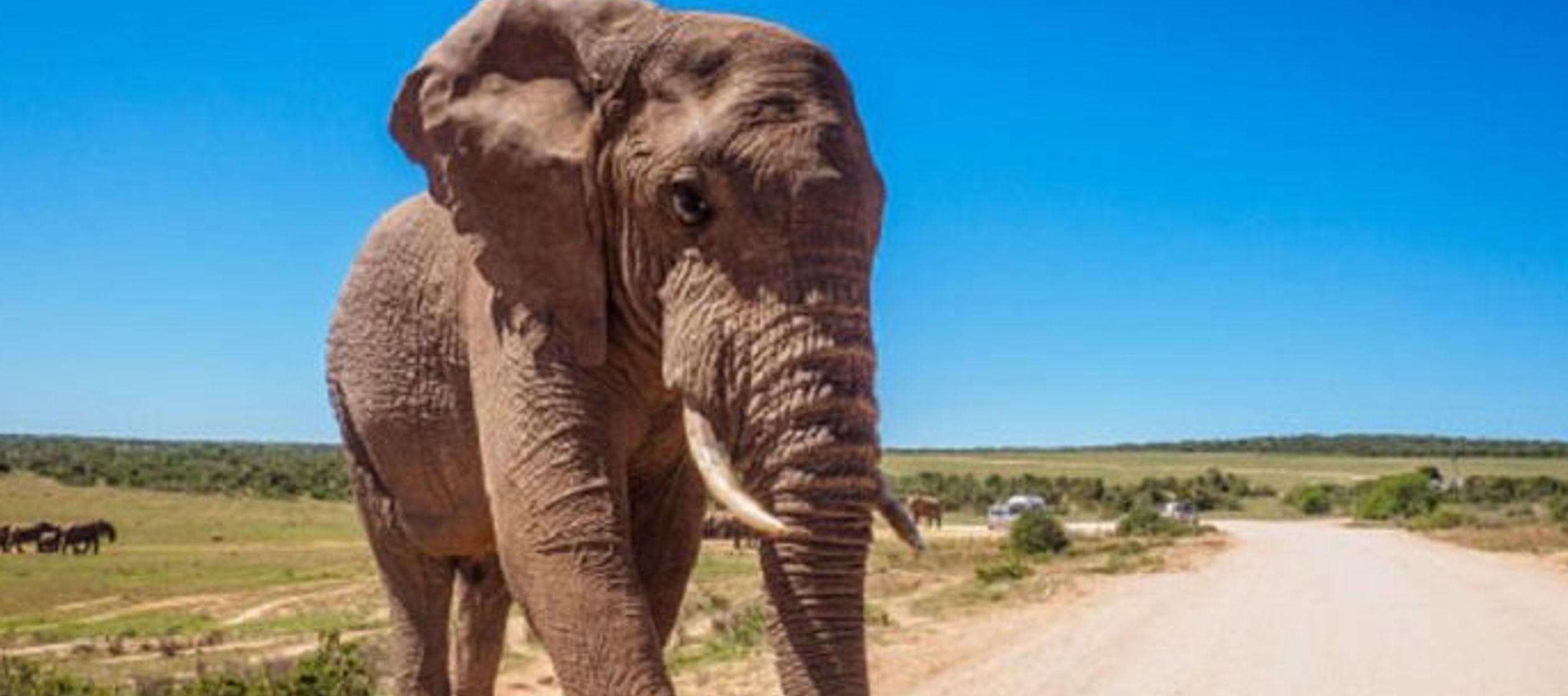 La mujer de 49 años formaba parte de un grupo de turistas que se cruzó con una manada...
