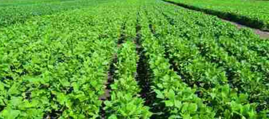 Área de soja argentina crecería a 17,5 mln has en ciclo 2018/19: Gobierno