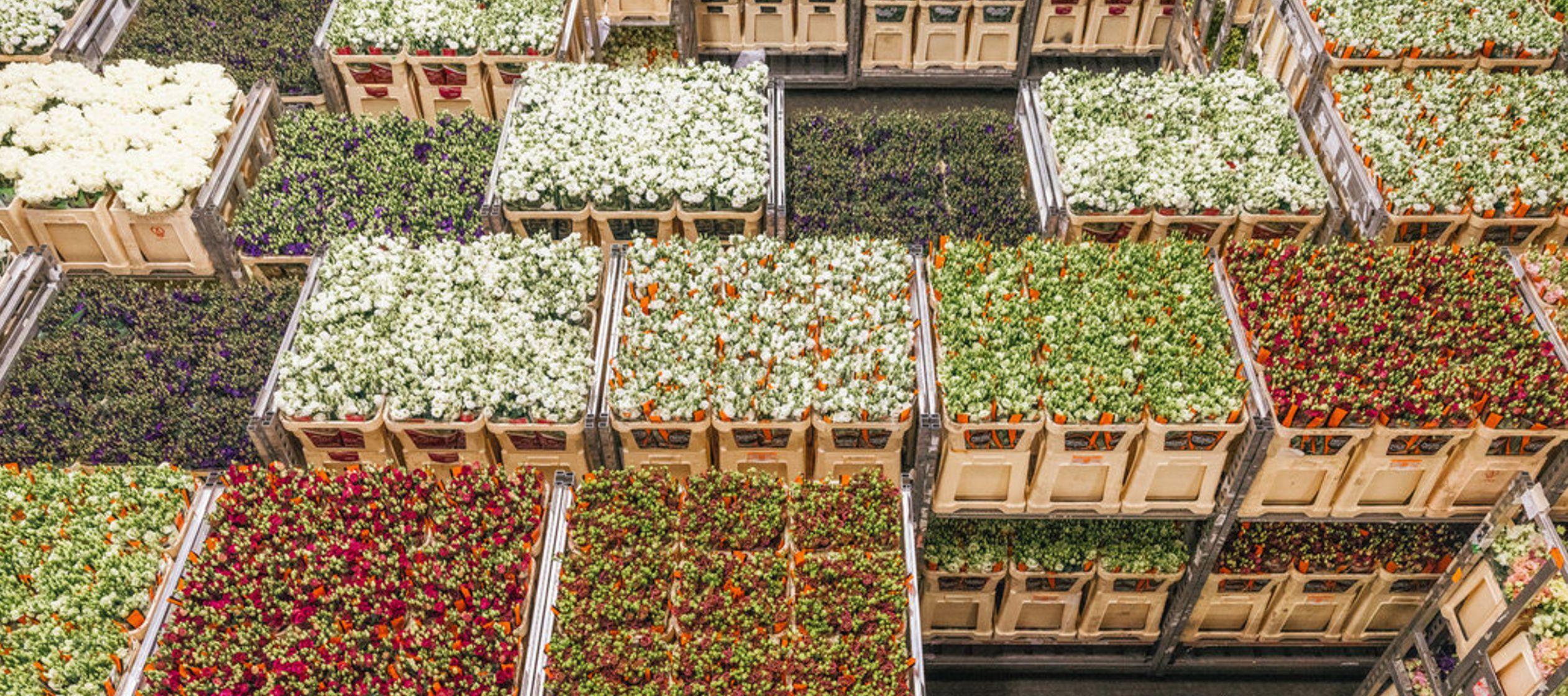 Es el director de operaciones de Royal FloraHolland, un mercado donde se venden cerca de doce mil...