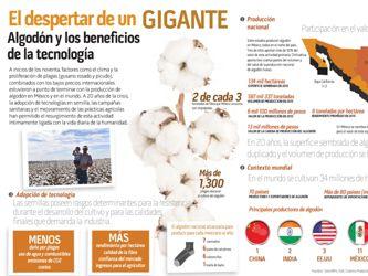 Arranca la temporada de siembra de algodón en México